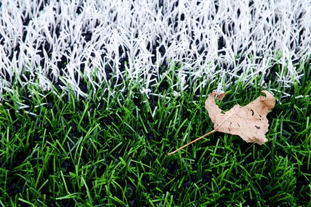 end of the line: End of football season. Dry birch leaf fallen on ground of plastic green football turf with painted white line .