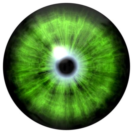light reflection: Isolated big green eye. Illustration of green blue stripped eye iris, light reflection