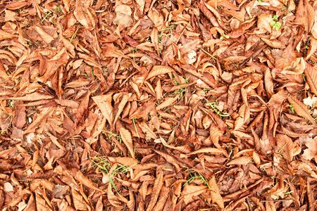 ground nuts: Autumn park ground with chestnut    leaves, dark colorful leaves and nuts Stock Photo