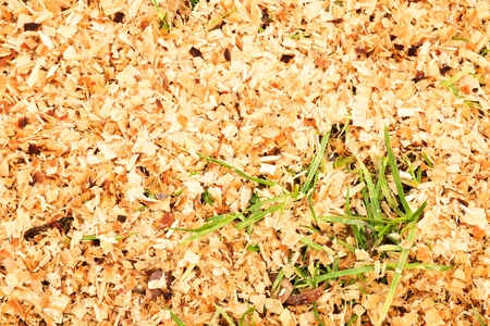 bark peeling from tree: Sawdust of dry alder wood with pieces of dry brown bark on ground with grass. Texture with details Stock Photo