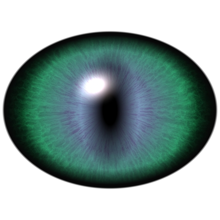 pupil: Green animal eye with large pupil and bright retina in background. Dark green iris around pupil, detail view into eye bulb.