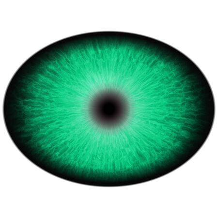 retina: Green animal eye with large pupil and bright retina in background. Dark green iris around pupil, detail view into eye bulb.