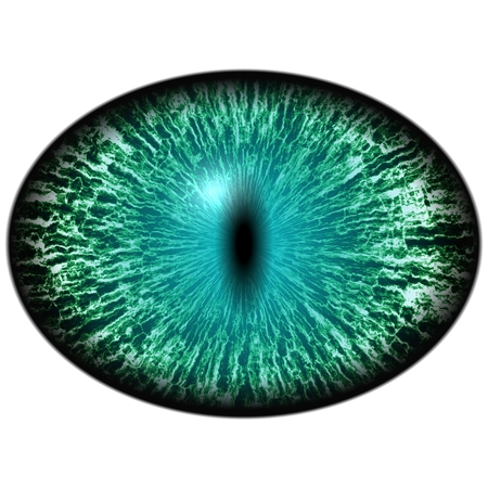 dilated pupils: Green animal eye with large pupil and bright retina in background. Dark green iris around pupil, detail view into eye bulb.