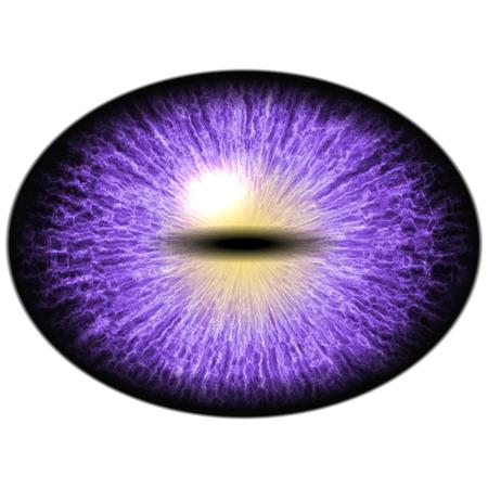 retina: Isolated eye. Raptor purple eye with large pupil and bright red retina in background. Dark iris around pupil. Stock Photo