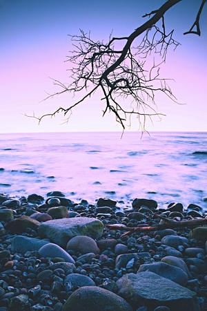 water scape: Romantic colorful sunset at wavy sea. Stony beach with bended tree and hot pink sky in water mirror