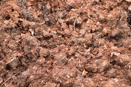 dung: Natural fertilizer from cow dung