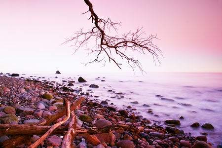 bended: Romantic morning. Bended tree above sea level,  boulders sticking out from smooth waves. Pink horizon with first hot sun rays.