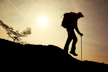 Man hiker make down step, legs in boots and poles. Sunny day on mountain peak rock. Small pine bonsai tree grows in rock.