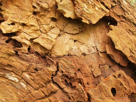 cryptogram: Rotten old wood. Fallen tree with marks of attack by insects and wood destroying fungus
