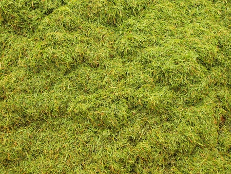 putrefy: Decay harvested grass in big green smell mound in corner of garden Stock Photo