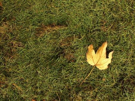 putrefy: Fallen dry maple leaf. Decay harvested grass in big green mound in corner of garden.