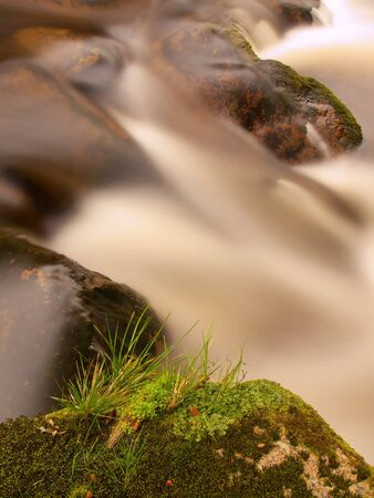 torrent: Torrent, mountain stream with stones, rocks and fallen tree. Stock Photo
