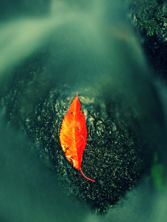 castaway: Autumn colorful leaf. Castaway slipper on wet stone in stream Stock Photo
