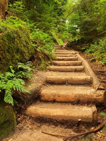 Old wooden stairs in forest Overgrown garden, tourist footpath. Steps from cut beech trunks, fresh green branches above footpath