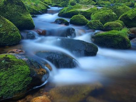 渓流は、ガルチ砂岩で、アカシア、ブナそしてカシの緑の枝の下に表示します。水位、緑反射をします。山・川で夏の終わり。