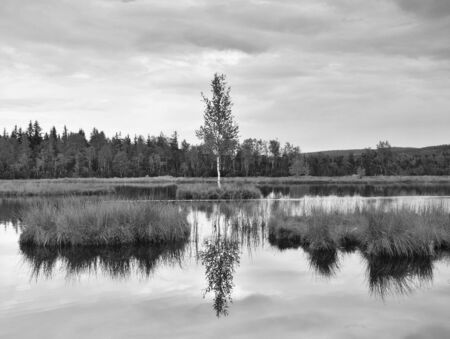 mirror on the water: Swampy lake with mirror water level in mysterious forest, young tree on island in the middle. Fresh green color of herbs and grass. Old photo effect. Stock Photo