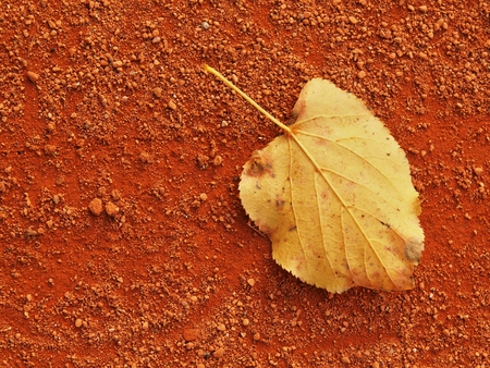 seson: Dry leaf on dry ground of empty red tennis court