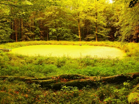 bended: Swamp in forest. Fresh spring green color. Bended branches above water, reflection in water level.