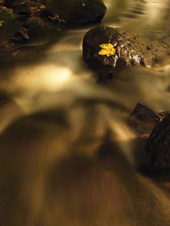 beck: Fallen autumn maple leaf in rapids