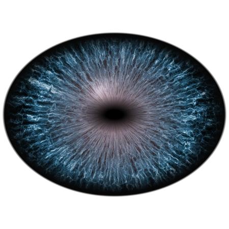 retina: Isolated blue eye. Big eye with striped iris and dark elliptic pupil with dark retina.