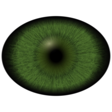 green eye: Green eye with large pupil and bright retina in background. Dark green iris around pupil, detail view into eye bulb.
