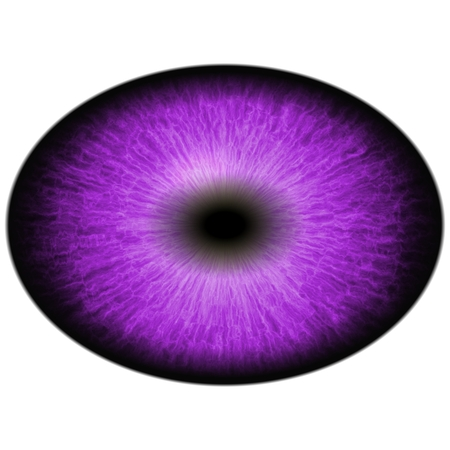retina: Red purple eye with large pupil and dark retina. Dark purple iris around pupil, detail view into eye bulb.