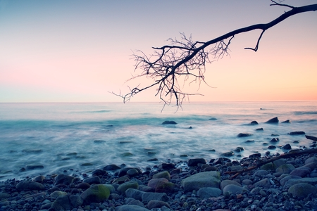 Romantic colorful sunset at wavy sea. Stony beach with bended tree and hot pink sky in water mirror