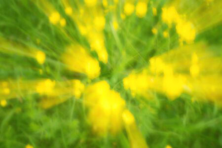 yellow blossom: Defocused yellow flowers and grass. Blurred and de focused yellow blossom and green stalks leaves for background. Hypnotic blurry effect.