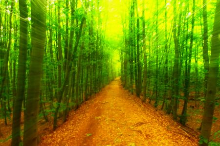 unclear: Defocused forest for background. Blurred and de focused fresh green colors in forest, orange leaves on path. Hypnotic blurry effect.