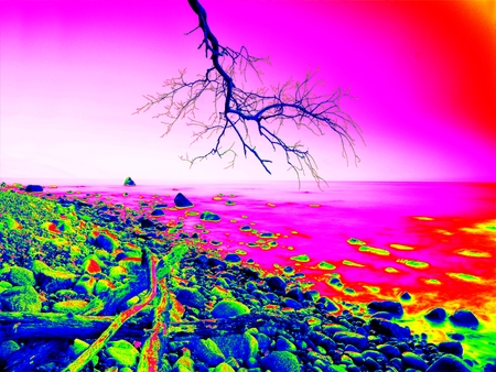 thermography: Thermography measurement, changed colors of ultra violet light. Bended branches above warm sea level.