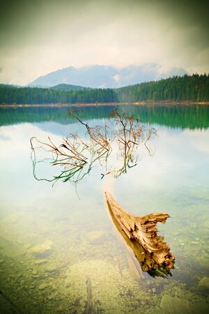bove: Mountain  lake before sunset. Wet sand beach with tree fallen into water. Stormy cloudy sky bove  blue mountains at horizon. Stock Photo