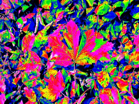 infra red: Infrared scan of leaves on park ground. Maple and chesnuts leaves in changed colors. Temperature measurement.