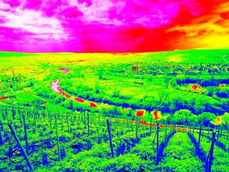 ローリングの風景、農業と環境を一緒にカバー正規の列に並べられ若いブドウの赤外線スキャン