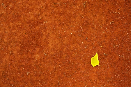 birch leaf: Yellow birch leaf an tennis court. Dry light red crushed bricks surface. Soft effect.