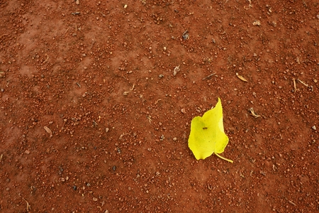 end of the trail: Yellow birch leaf an tennis court. Dry light red crushed bricks surface. Soft effect.