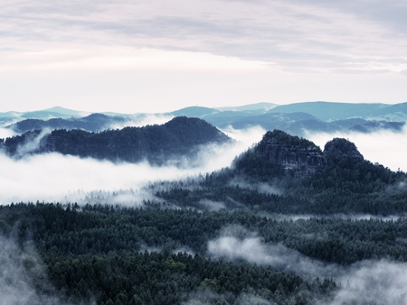 heavy effect: Summer sunrise forest after heavy rain. Beautiful mountain within inversion. Treetops increased from foggy background. Vivid effect.