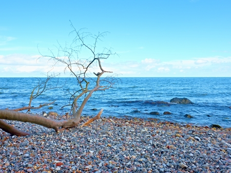 stony: Blue sky above sea water level. Lonely fallen tree on empty stony coastline. Death tree. Stock Photo