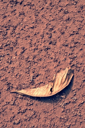red clay: Dry chestnut leaf on red clay. Dry light red crushed bricks surface on outdoor tennis ground. Detail of rough texture
