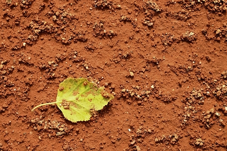seson: Detail of dry leaf on tennis court. Dry light red crushed bricks surface on outdoor tennis ground. End of season.