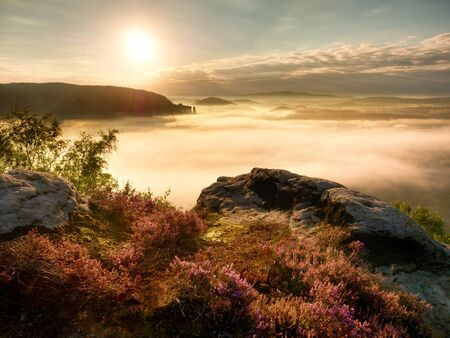 foggy hill: View into deep misty valley over tufts of heather. Hill peaks increased from autumn foggy countryside bellow, the fog is striped due to strong Sun rays. Vivid effect Stock Photo