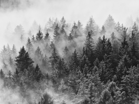 heavy rain: Misty morning after heavy rain. View into long deep valley full of fresh spring mist. Fall landscape Within daybreak after rainy night. Black and white photo