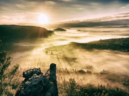 awaking: Misty awaking of  beautiful fairy valley. Peaks of rocks cut creamy foggy clouds. Fog is shinning . The fog is swinging between trees.