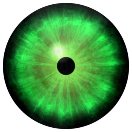 cornea: Isolated big green eye. Illustration of green blue stripped eye iris, light reflection