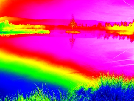 Amazing thermography photo. Young birch tree on island in middle of swamp lake. Purple morning  with peaceful water level in mysterious forest