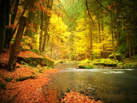 Fall at mountain river. Low level of water, gravel with vivid colorful leaves. Mossy boulders on river bank, yellow orange  leaves on trees.