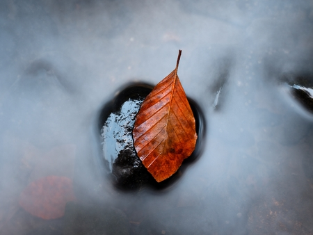 beech leaf: Autumn orange colors in water. Death beech  leaf is laying on wet stone in cold mountain stream. Stones and colorful autumn leaves. Stock Photo
