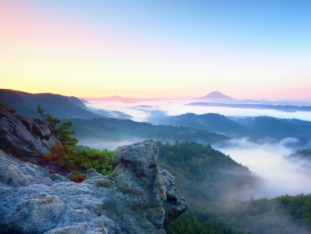 a wonderful world: Misty awaking of  beautiful fairy valley. Peaks of rocks above  creamy foggy clouds. Fog is shinning . The fog is swinging between trees.