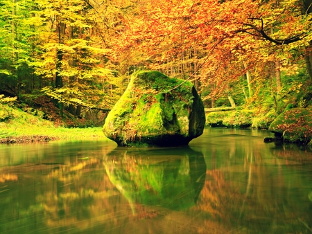 Autumn colorful forest above mountain river. Water under leaves trees. Low level with yellow orange reflection. Green mossy boulder in stream.