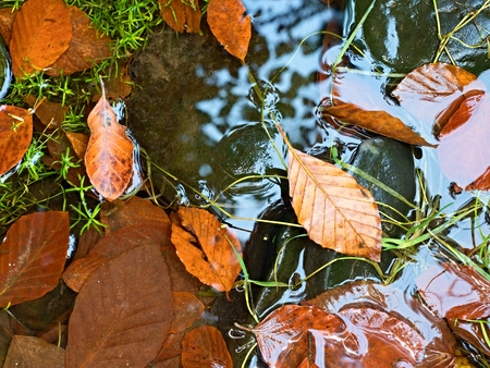 Fall colors. Detail of rotten old leaves  on basalt gravel in mirrored water of mountain stream. Vivid colorful leaves  and dark slippery stones on river bank.