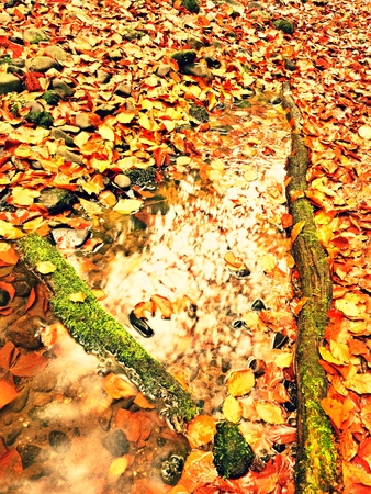 Natural mirror in orange frame. Fallen beech leaves  in water of mountain river, first leaves bellow water level. Drowned leaves in cold river. Stock Photo